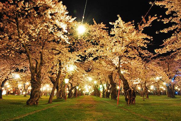 "都市公园""AOBAGAOKA"" 青ヶ丘公園"
